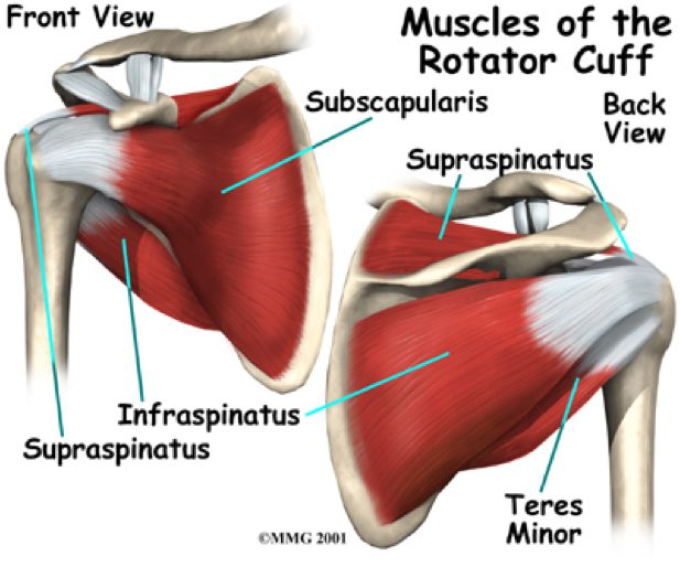 Shoulder Impingement Defining And Treating Hampton Physical Therapy